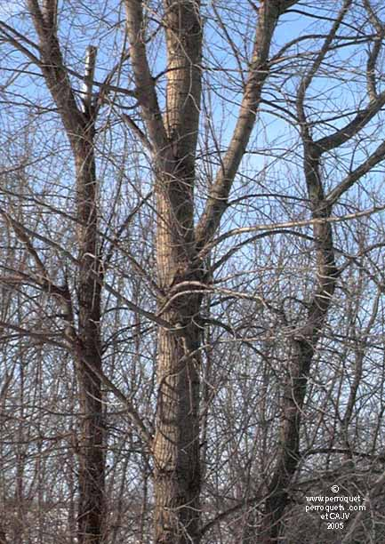 Be careful on trees contaminated by chemicals.
