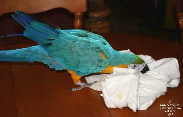 The price does not matter. Often, the parrot will prefer an old towel.