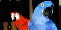 About parrots psychology
