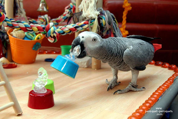 Parrot learning to occupy itself through its own activities.