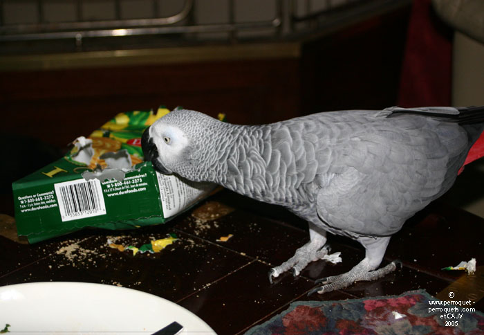 this African grey is not waiting any more.