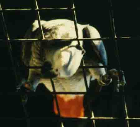 Parrots are prisonners that remember the days of freedom.